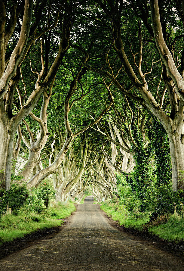 The Dark Hedges Photograph by Michelle Mcmahon