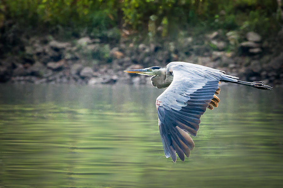 Bird Photograph - The Glide by Annette Hugen