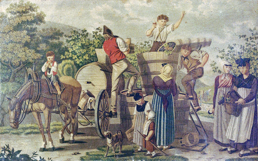 The Harvesting Of Wine Grapes, 19th Century Engraving, Time Drawing by English School