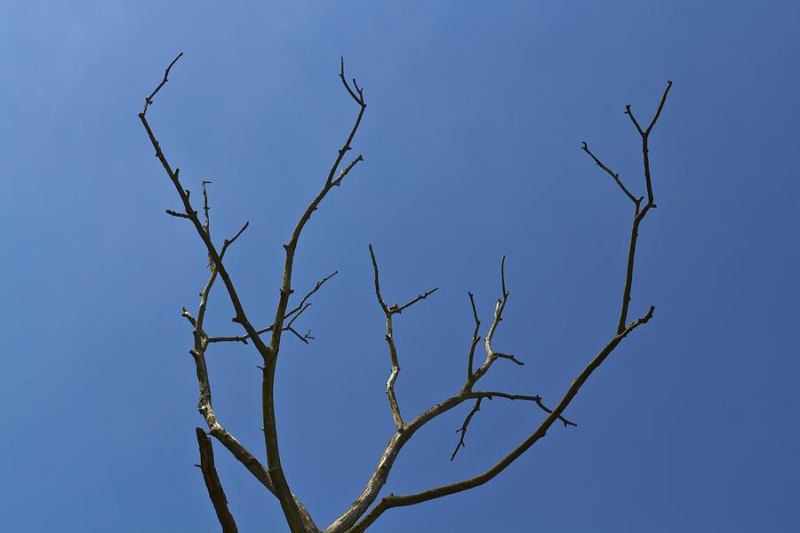 Lightening Photograph - The Lightning Tree by David Pyatt