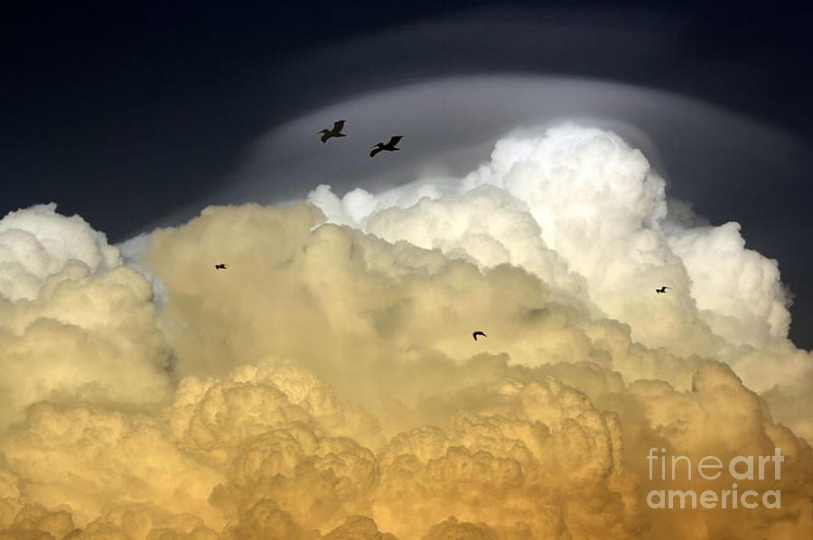 Sky Photograph - The Sky by Irina Davis