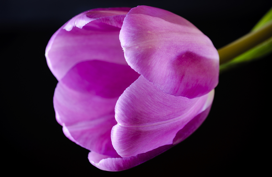 Beautiful Photograph - The Very Pink Of Perfection by Christi Kraft