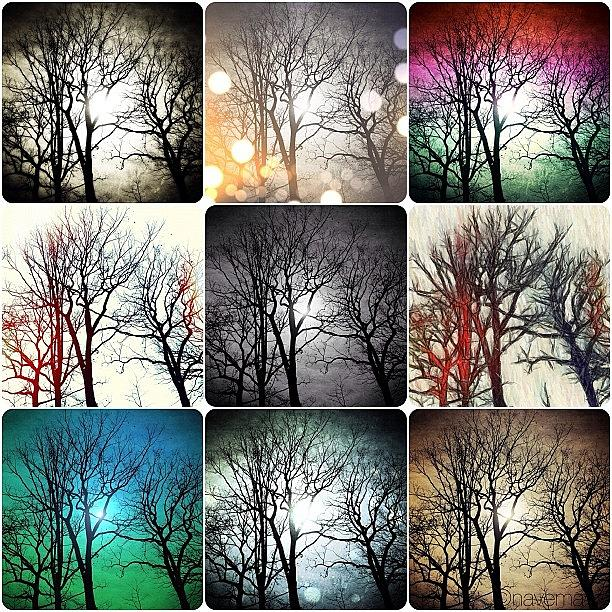 Gmy Photograph - Theme With Variation by Natasha Marco