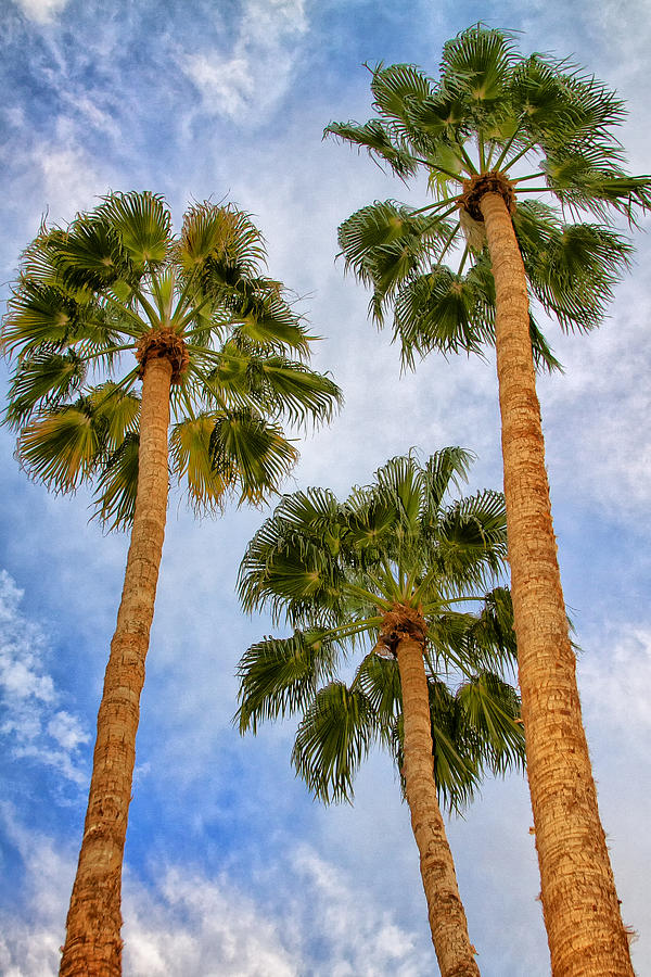 Palm Springs Photograph - THREE PALMS Palm Springs by William Dey