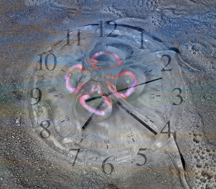 Moon Digital Art - Timing by Betsy Knapp