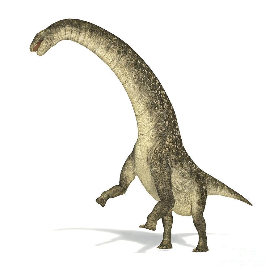 Titanosaurus Dinosaur On White Digital Art By Leonello