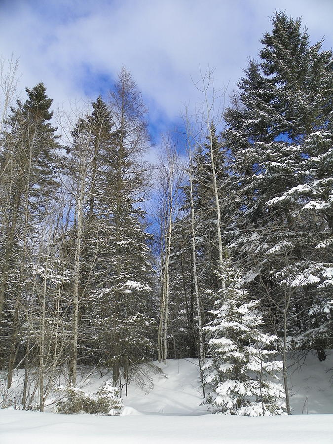Snow Photograph - To The Clouds by Gene Cyr