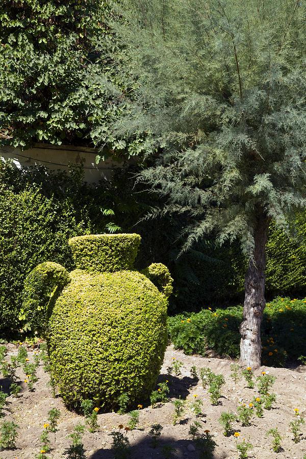 Topiary Vases In The Alcazar Gardens Photograph By John Rocha