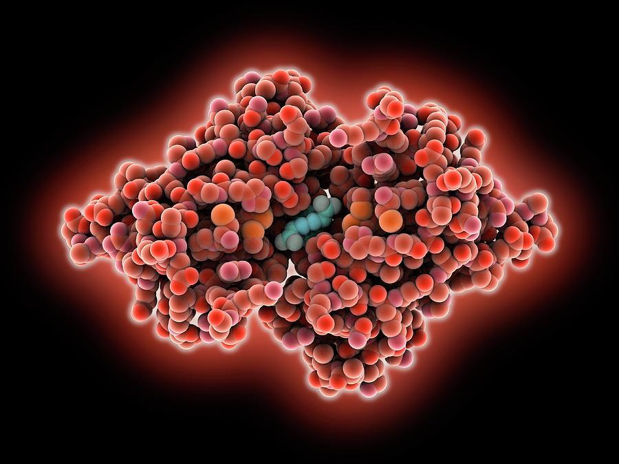 Transthyretin Photograph - Transthyretin Blood Protein by Laguna Design