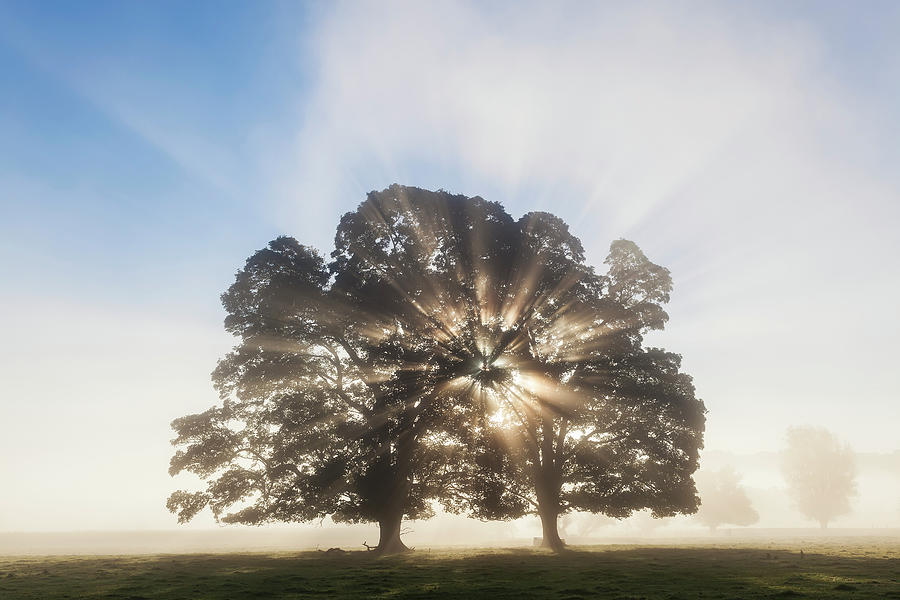 Tree At Sunrise, Usk Valley, South Photograph by Peter Adams