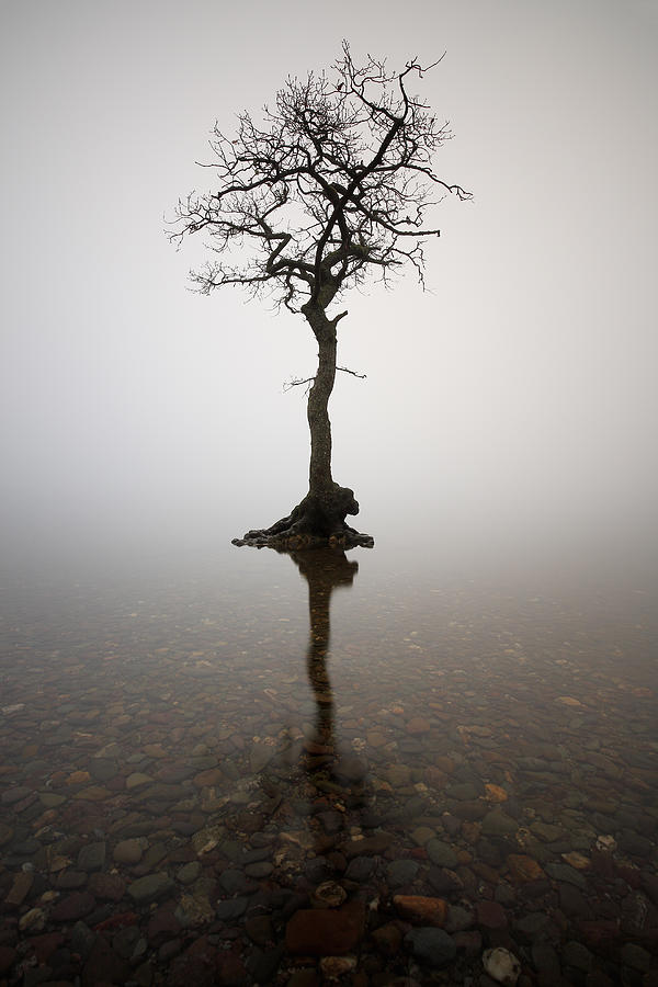Tree Photograph - Tree by Grant Glendinning