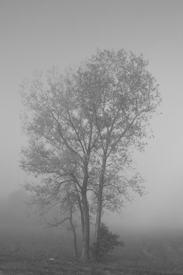 Tree Photograph - Tree In Morning Fog by Eje Gustafsson