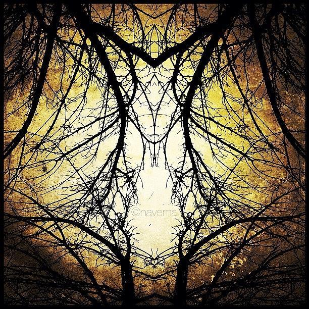 Symmetry Photograph - Tree Veins by Natasha Marco