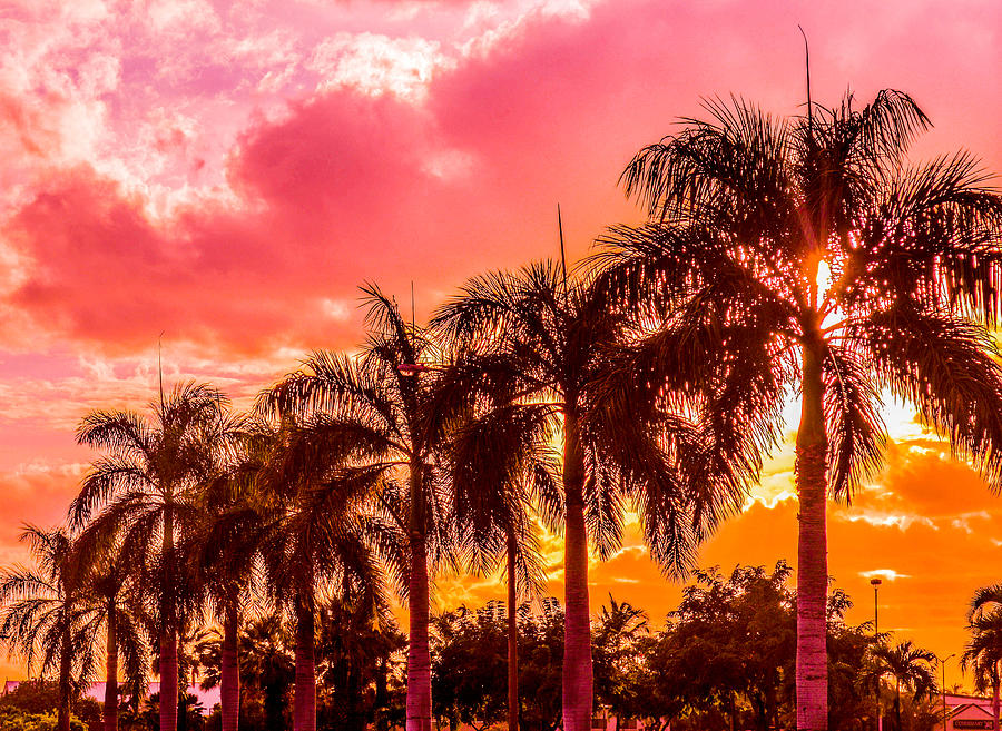 Palm Trees Photograph - Trees In A Row by Lisa Cortez
