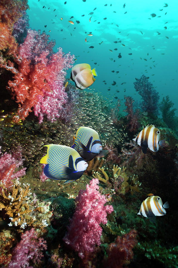 Tropical Coral Reef Scenery Photograph by Georgette Douwma