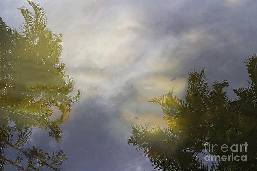 Fish Photograph - Tropical Reflections by Anne Rodkin