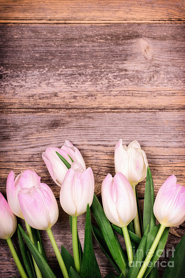 Aged Photograph - Tulips Over Old Wood by Jane Rix