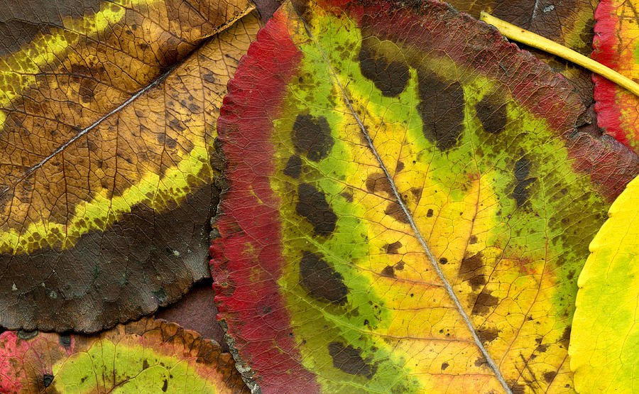 Leaf Photograph - Turning Leaves by Stephen Anderson