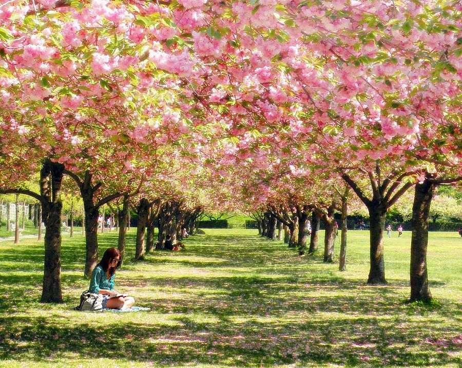 Cherry Blossom Trees Photograph - Under The Cherry Blossom Trees by Nina Bradica