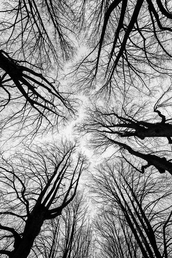 up by Darko Ivancevic