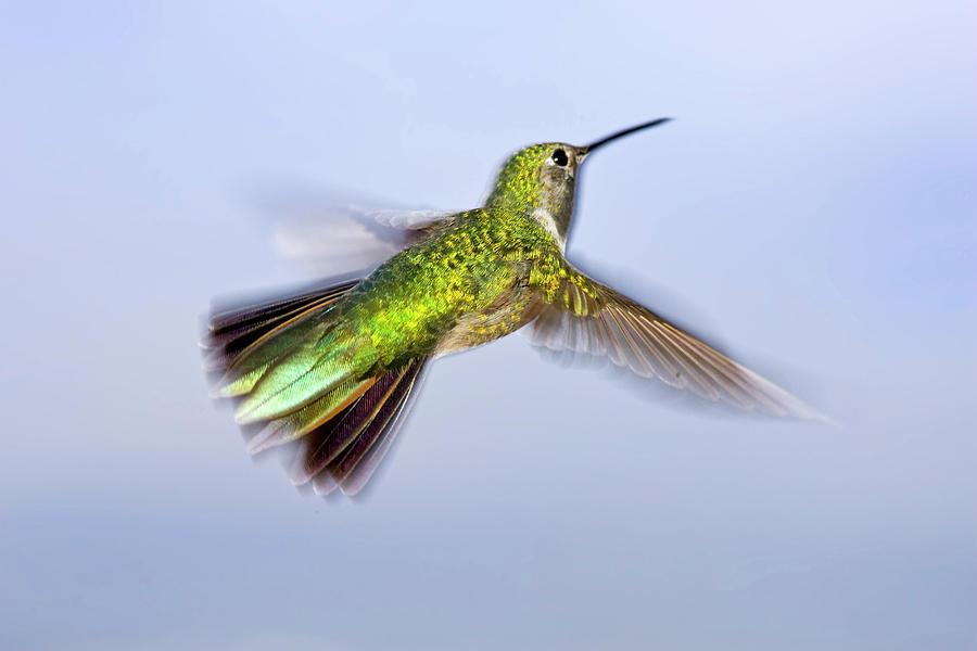 Animal Photograph - Usa, Colorado, Summit County, Heeney by Jaynes Gallery