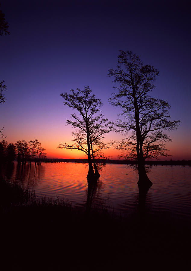 Adam Jones Photograph - Usa, Tennessee, Reelfoot National by Adam Jones