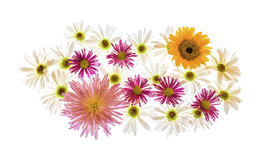Horizontal Photograph - Variety Of Flowers Against White by Panoramic Images