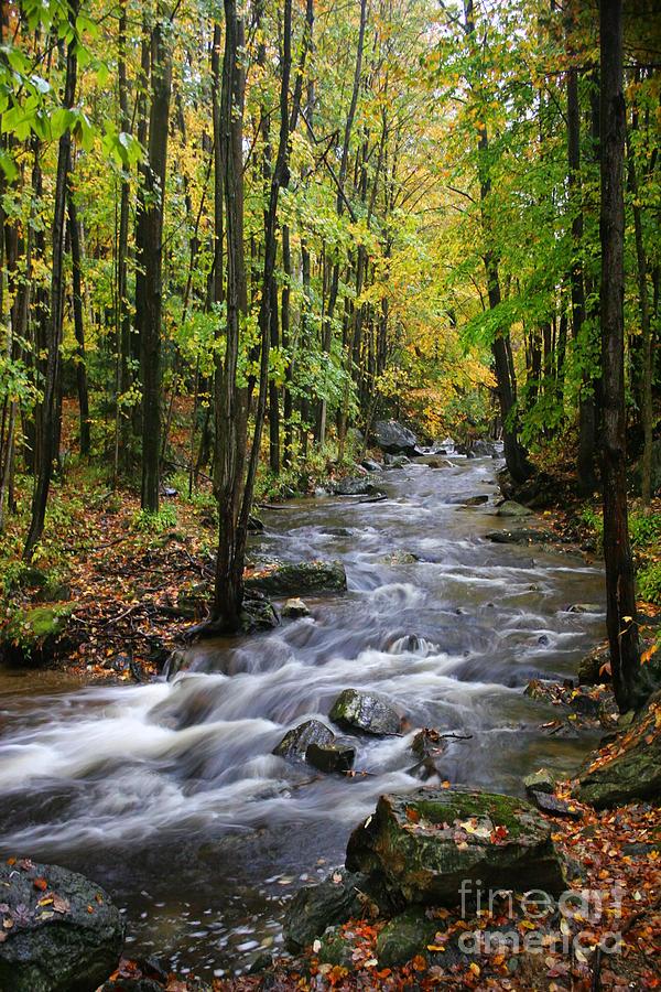 Vermont Stream by Bobbie Turner