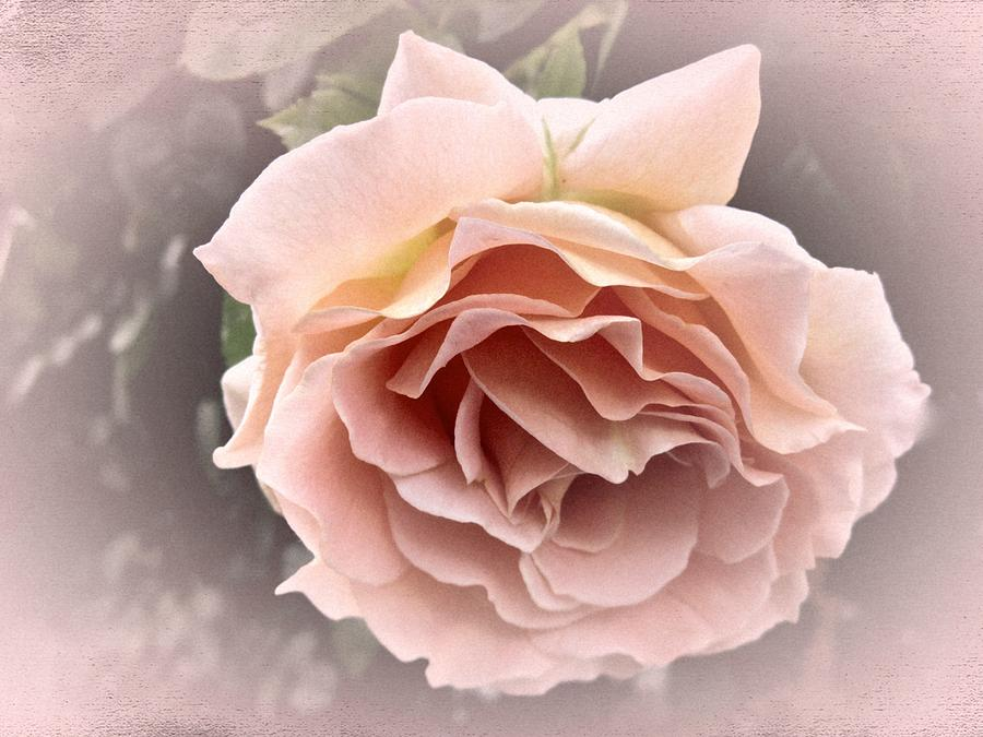 Rose Photograph - Vintage Rose No. 3 by Richard Cummings