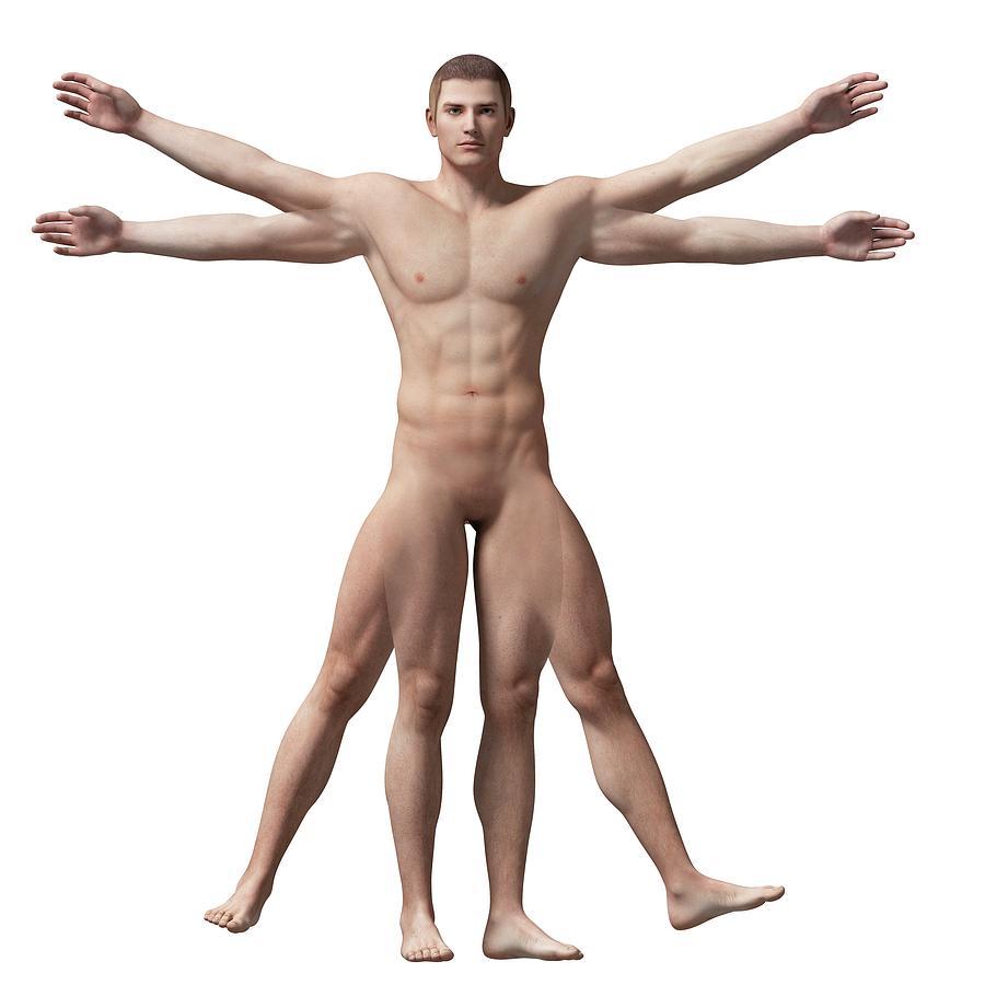 Vitruvian Man Anatomy Photograph By Sebastian Kaulitzki