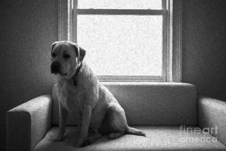 Labrador Retriever Photograph - Waiting by Diane Diederich