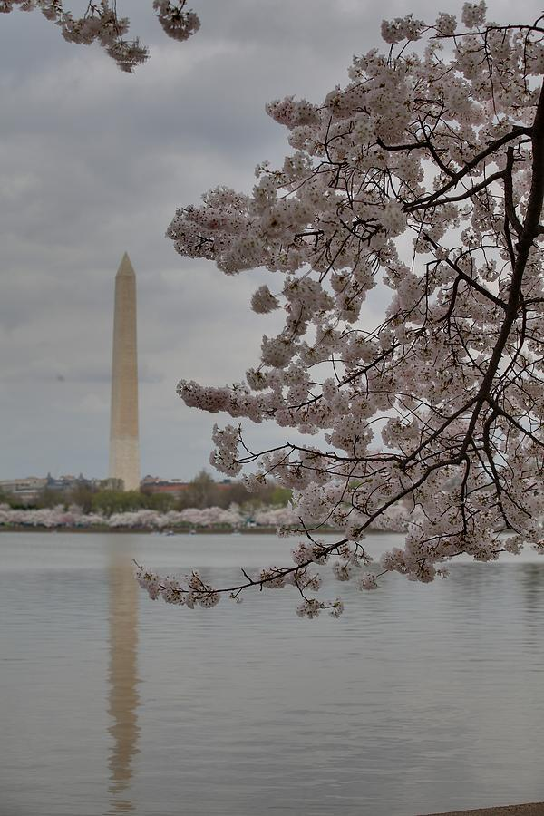 America Photograph - Washington Monument - Cherry Blossoms - Washington Dc - 011316 by DC Photographer