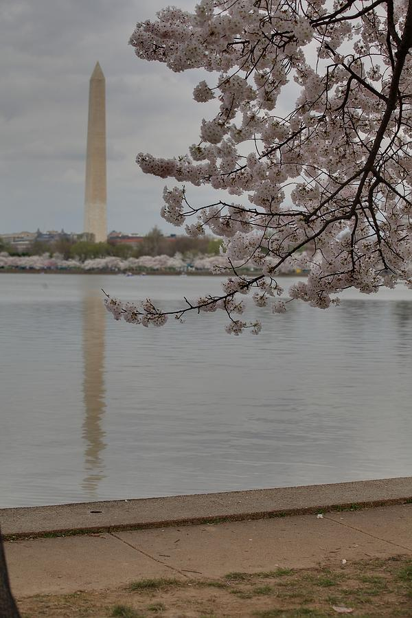 America Photograph - Washington Monument - Cherry Blossoms - Washington Dc - 011317 by DC Photographer