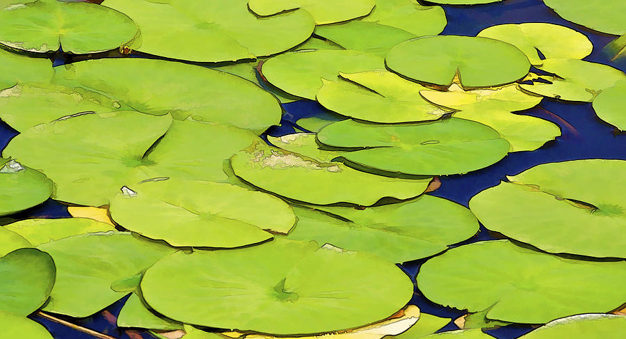 Detail Photograph - Water Lilly by David Letts