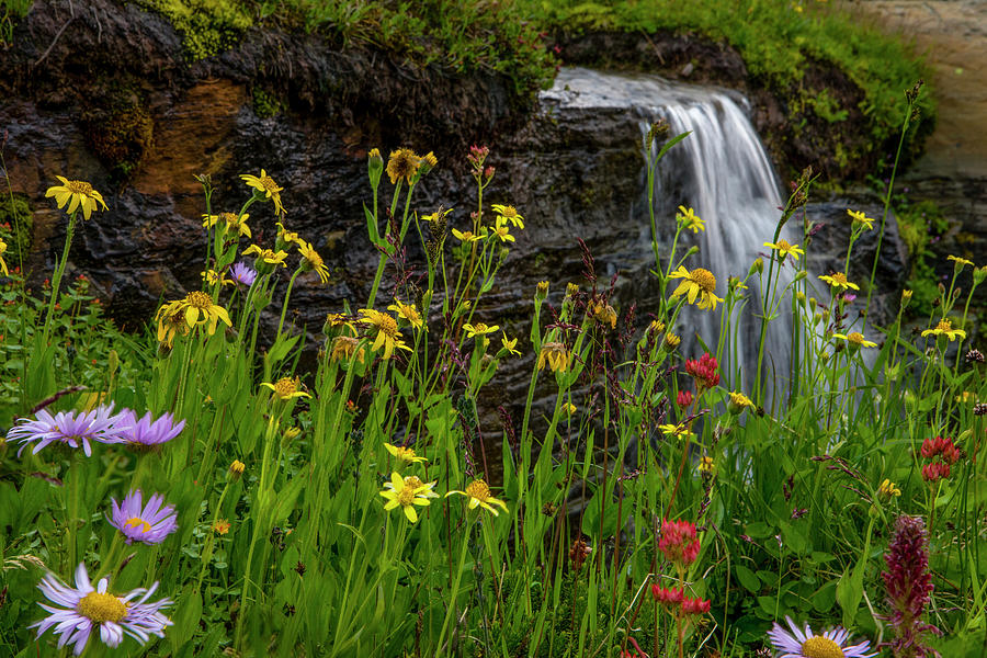 Flower Photograph - Waterfall Behind Wildflowers by Tom Norring
