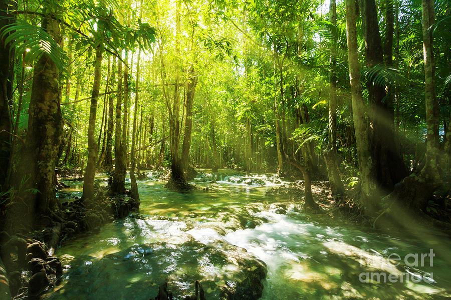 Adventure Photograph - Waterfall In Rainforest by Atiketta Sangasaeng