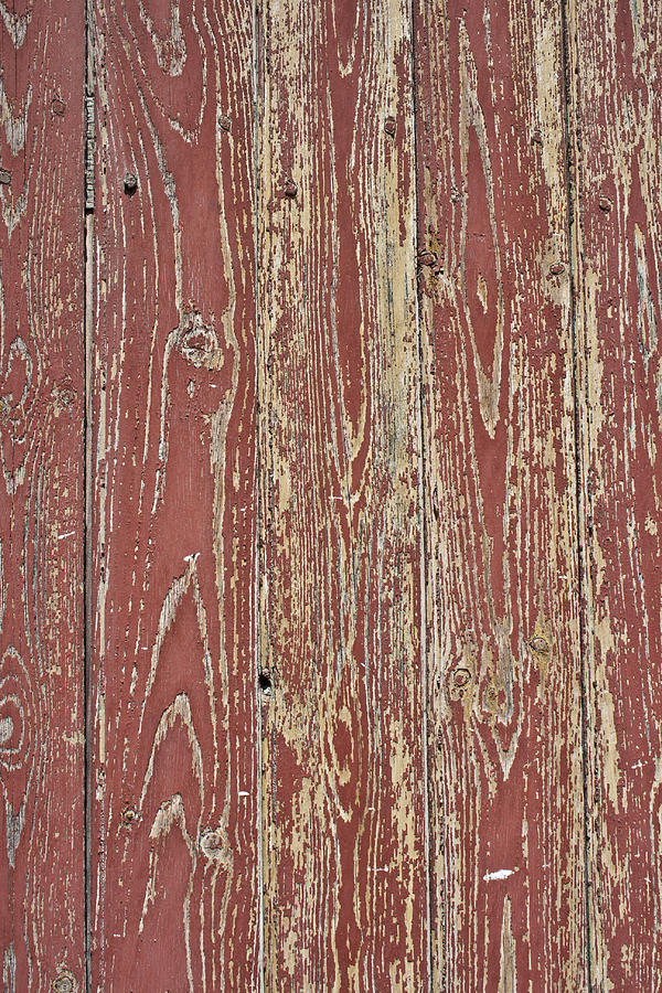 Painted Door Photograph - Weathered And Worn by Georgia Fowler