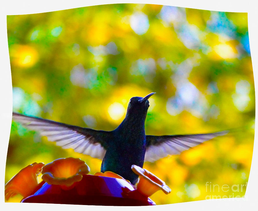 Bird Photograph - What Do We Have Here? by Al Bourassa