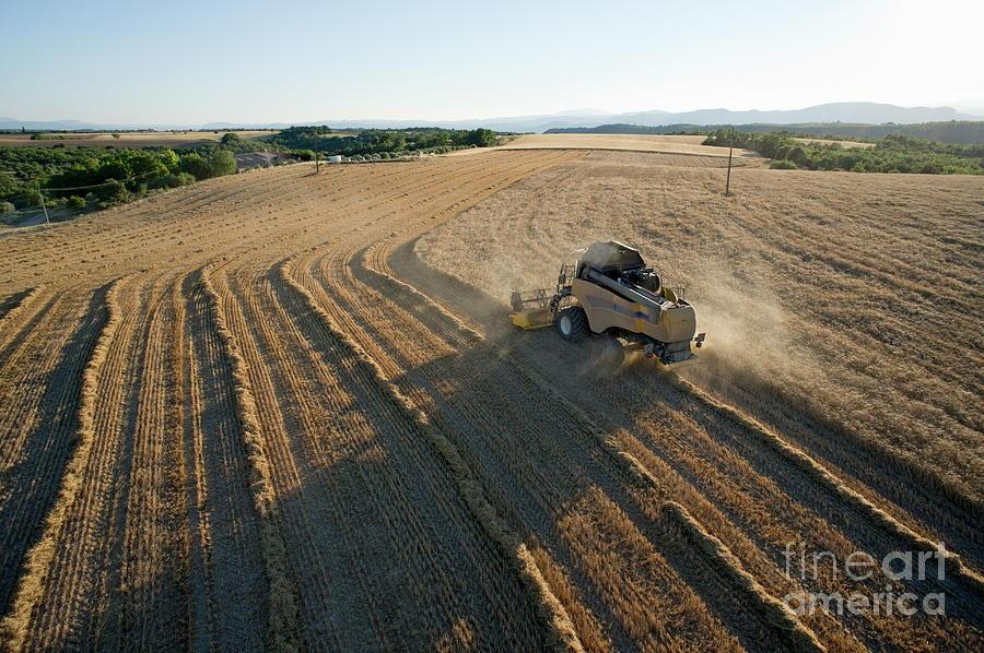 Abundance Photograph - Wheat Harvest In Provence by Sami Sarkis
