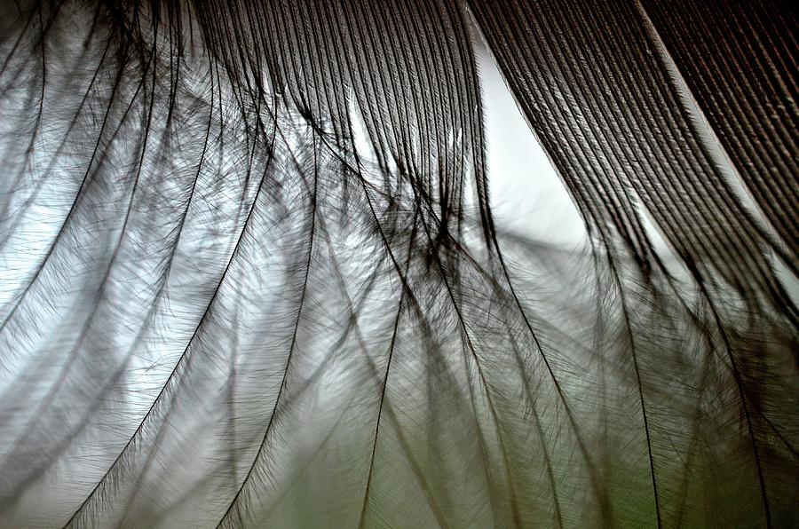 Feather Photograph - When Dreams Meet Reality by Mike Melnotte