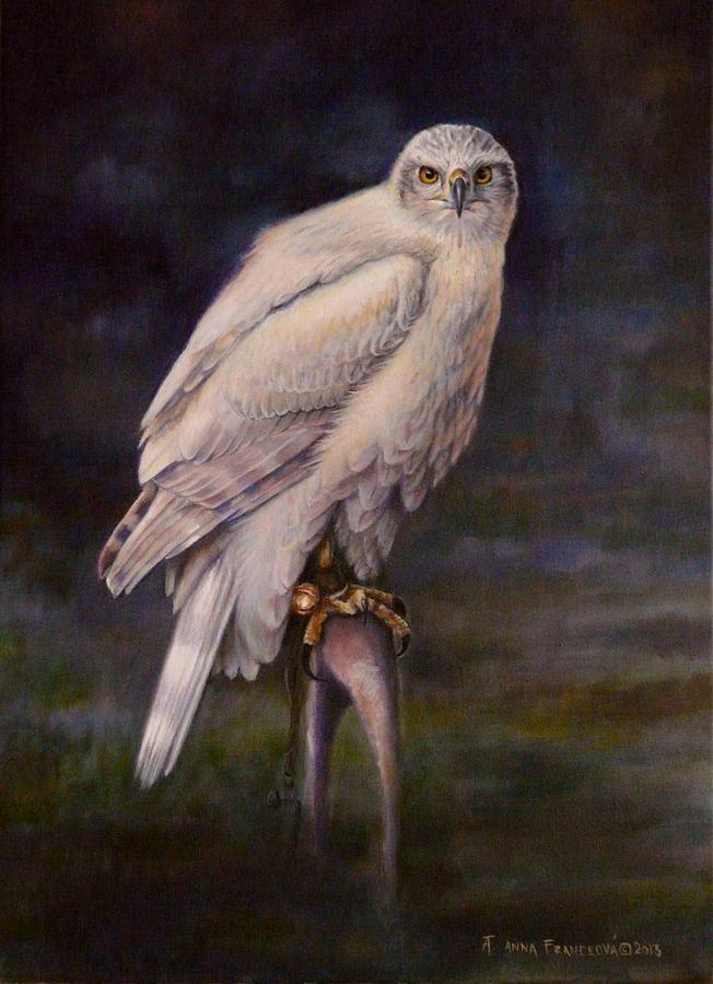 Falconry Painting - White Goshawk by Anna Franceova