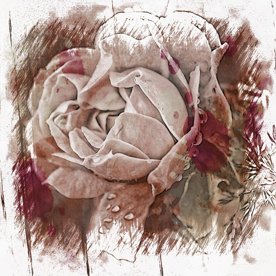 Pink Photograph - White Rose by Angel Eowyn