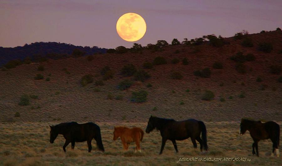Wild Horses Photograph - Wild Horse Moon  by Jeanne  Bencich-Nations