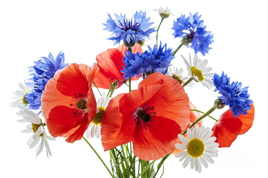 Flowers Photograph - Wildflower Bouquet by Elena Elisseeva