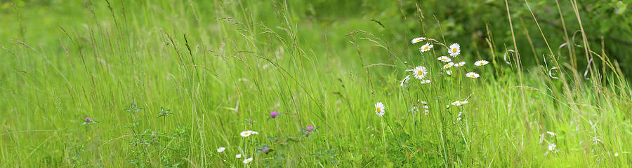 Color Image Photograph - Wildflowers In A Field, Gooseberry by Panoramic Images