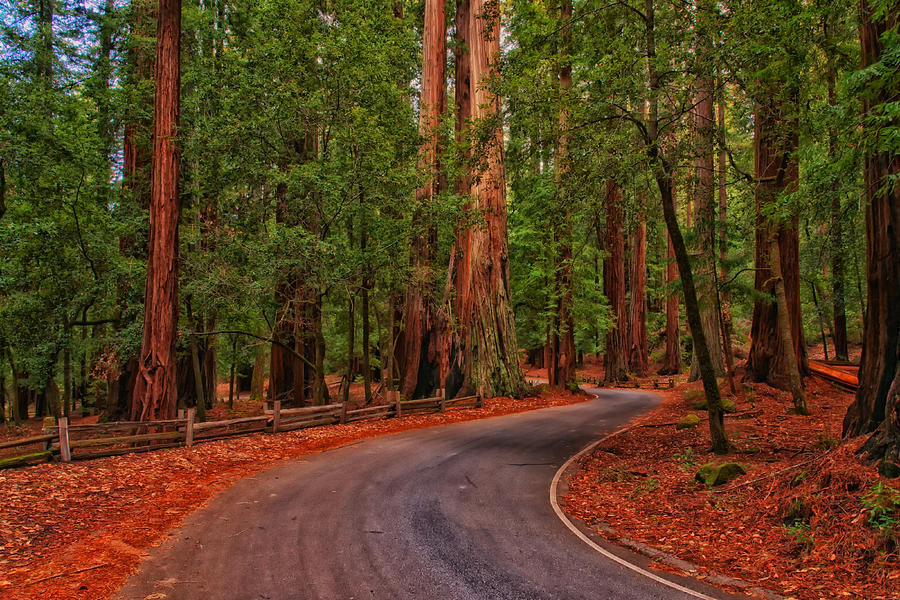 Winding Road through the Redwood Forest - California ...