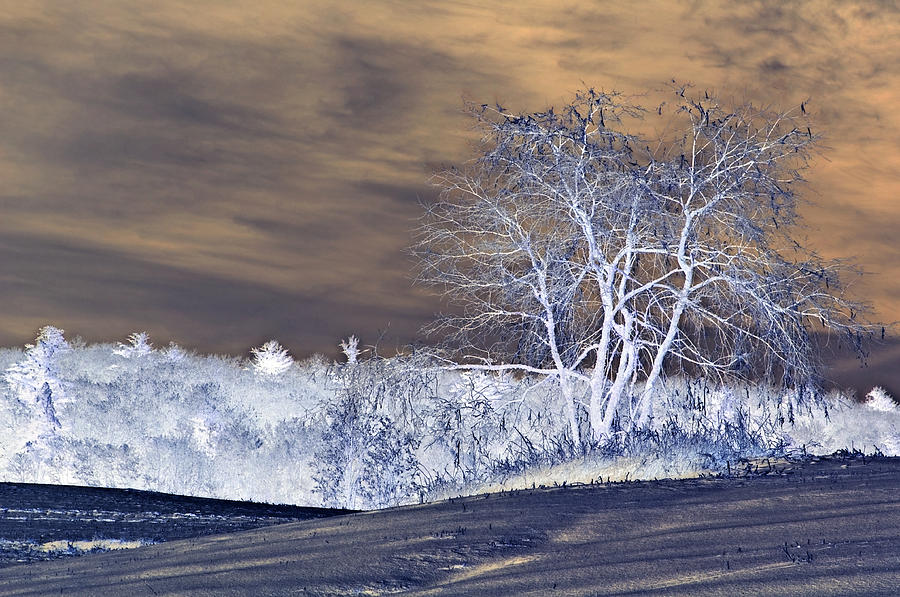 Winter Photograph - Winter Blues by Susan Leggett