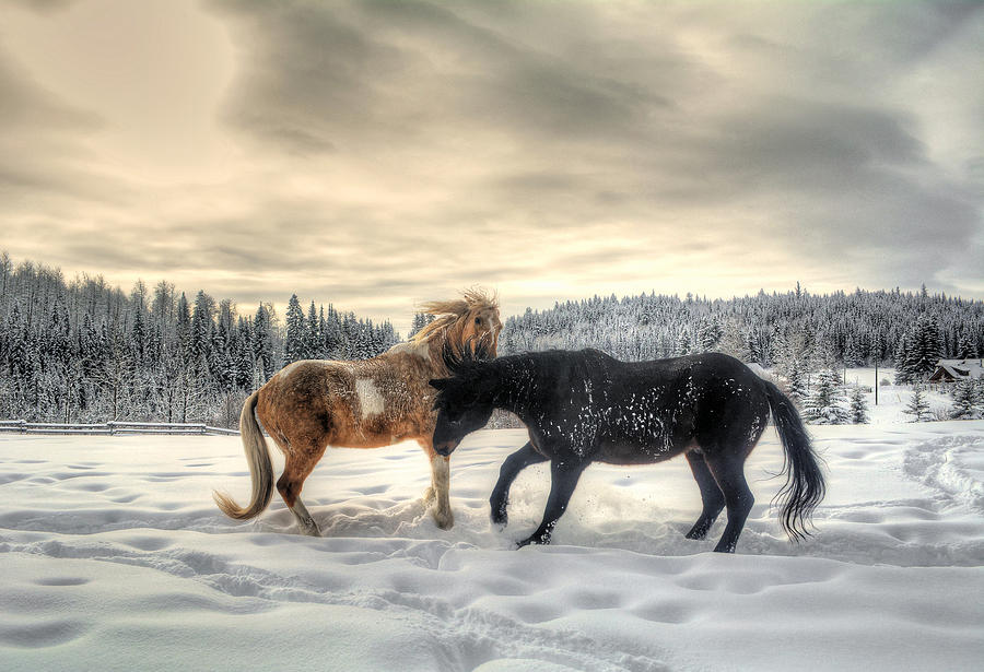 Horses Photograph - Winter Challenge by Skye Ryan-Evans