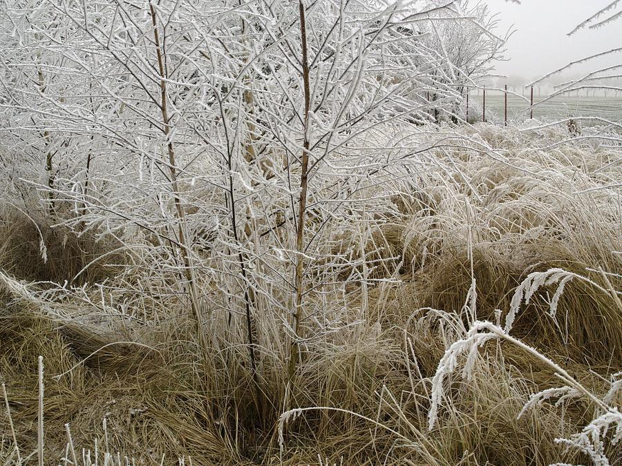 Grass Photograph - Winter Grass by Magdalena Mirowicz