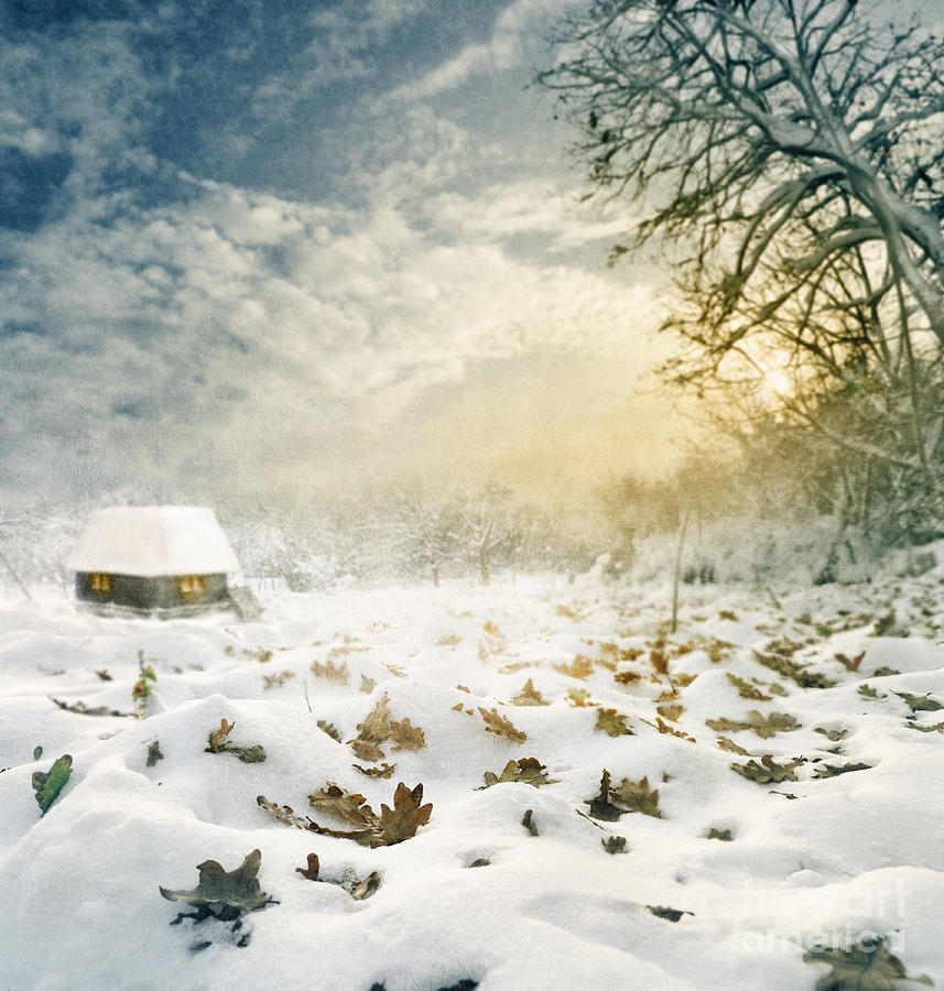 Christmas Digital Art - Winter by Jelena Jovanovic